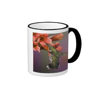 Female Ruby Throated Hummingbird in flight, Ringer Coffee Mug