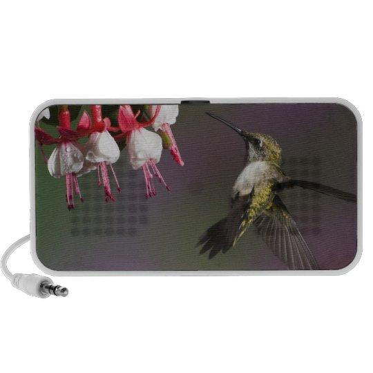 Female Ruby throated Hummingbird in flight. Portable Speaker
