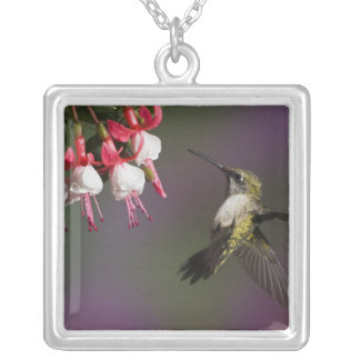 Female Ruby throated Hummingbird in flight. Silver Plated Necklace