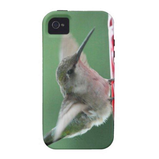 Female Ruby-Throated Hummingbird iPhone 4 Case