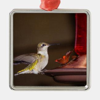 Female Ruby-throated Hummingbird Metal Ornament