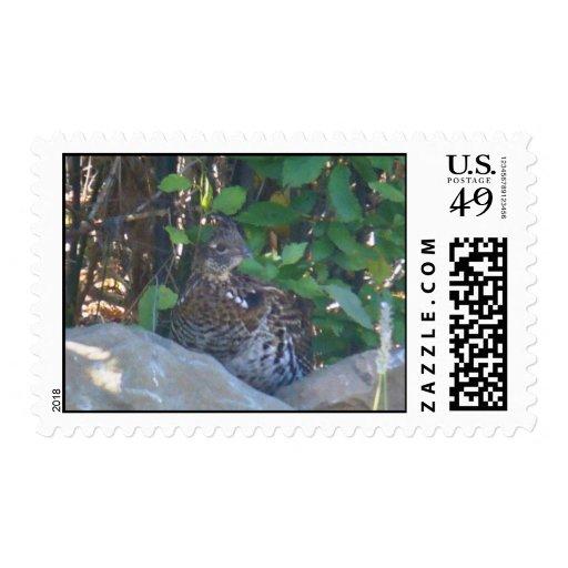 Female Ruffed Grouse  Postage