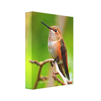 Female Rufous Hummingbird on the Plum Tree Canvas Print