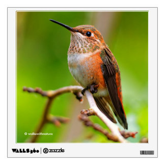 Female Rufous Hummingbird on the Plum Tree Wall Sticker