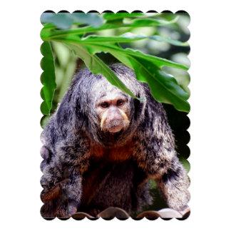 Female Saki Monkey Announcements