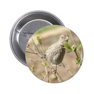 Female Sparrow Button