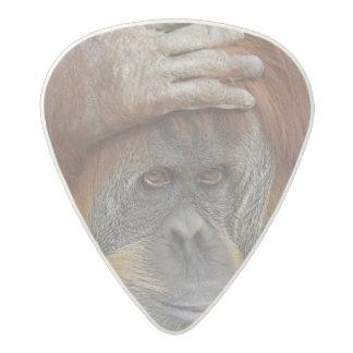 Female Sumatran Orangutan, Pongo pygmaeus Acetal Guitar Pick