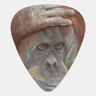 Female Sumatran Orangutan, Pongo pygmaeus Guitar Pick