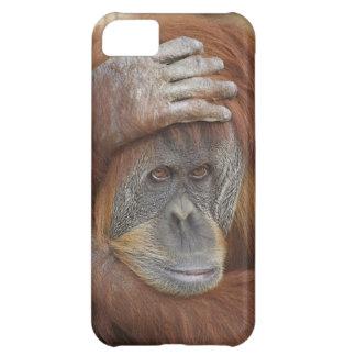 Female Sumatran Orangutan, Pongo pygmaeus iPhone 5C Cases