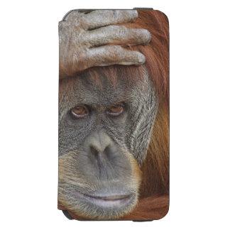 Female Sumatran Orangutan, Pongo pygmaeus iPhone 6/6s Wallet Case