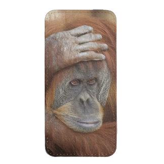 Female Sumatran Orangutan, Pongo pygmaeus iPhone SE/5/5s/5c Pouch