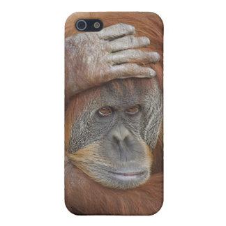Female Sumatran Orangutan, Pongo pygmaeus iPhone SE/5/5s Case