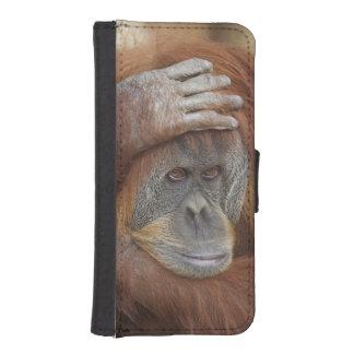Female Sumatran Orangutan, Pongo pygmaeus iPhone SE/5/5s Wallet Case