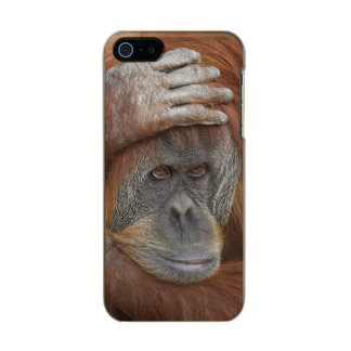 Female Sumatran Orangutan, Pongo pygmaeus Metallic Phone Case For iPhone SE/5/5s