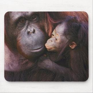 Female Sumatran Orangutan with baby, Pongo Mousepads