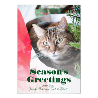 Female tabby cat with blue eyes peering out card