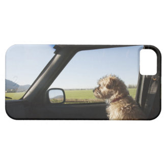 Female Terrier X sitting if front seat of iPhone 5 Cover