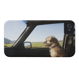 Female Terrier X sitting if front seat of iPhone 4 Cover