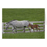 Female thoroughbred and young foal greeting cards