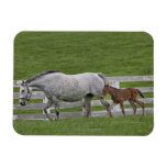 Female thoroughbred and young foal magnet