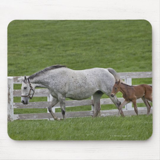 Female thoroughbred and young foal mouse pad