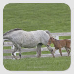 Female thoroughbred and young foal square stickers