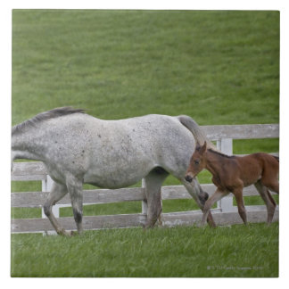 Female thoroughbred and young foal tile