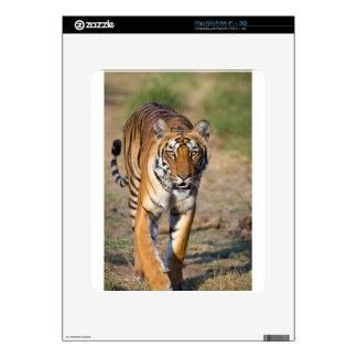 Female Tigress Stalking Prey Decal For The iPad