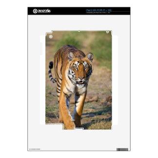 Female Tigress Stalking Prey Skins For The iPad 2