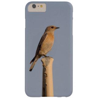 Female Western Bluebird Phone Case