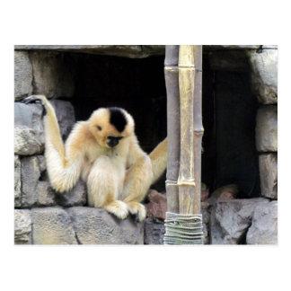 Female White Cheeked Gibbon Postcard