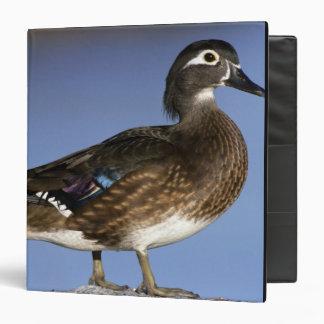 Female wood duck, Canada 3 Ring Binder