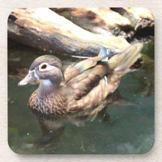 Female Wood Duck Coaster