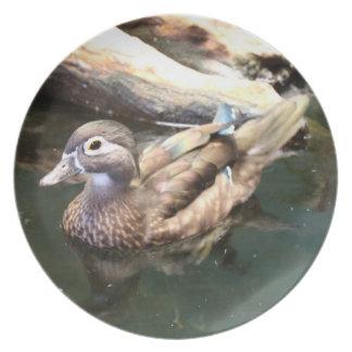 Female Wood Duck Plate