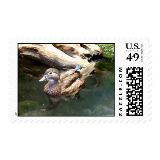 Female Wood Duck Postage Stamp