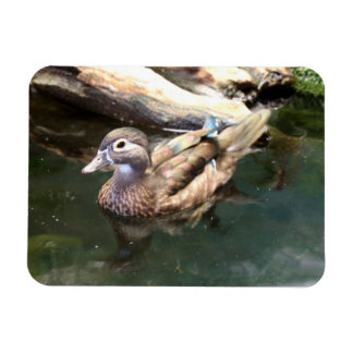 Female Wood Duck Rectangular Photo Magnet