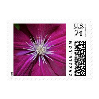 Feminine Pink Clematis Postage Stamps