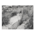 """""""Fence and Dunes"""" collection Postcard"""