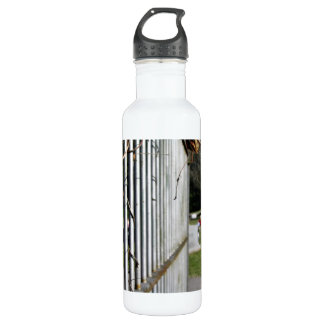 Fence at a cemetery water bottle