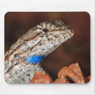 Fence Lizard Mouse Pad