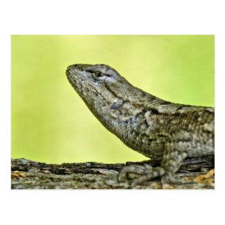 Fence Lizard Postcard. Postcard