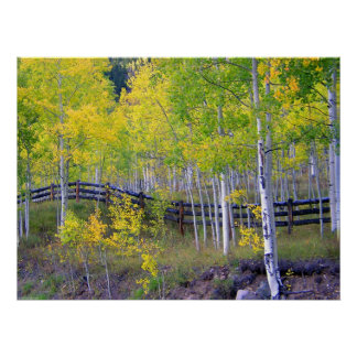 Fence with Aspens Dry Brush Poster