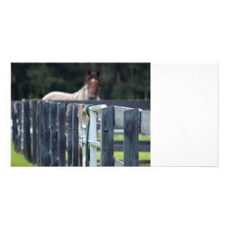 fence with faded horse behind photo card