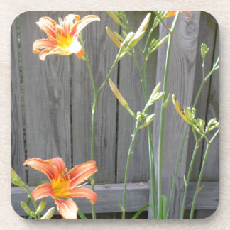 Fence with Lillies Drink Coaster