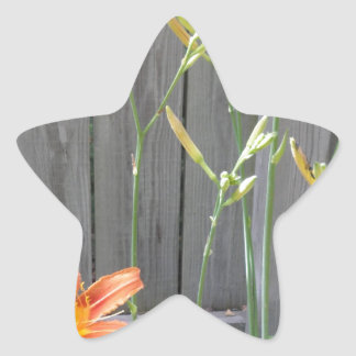 Fence with Lillies Star Sticker