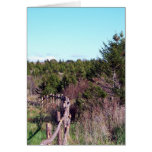 Fenced Forest Greeting Card