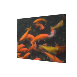 Feng Shui believe koi fish bring good luck. Gallery Wrap Canvas