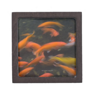 Koi fish gift boxes keepsake boxes zazzle for Koi fish good luck