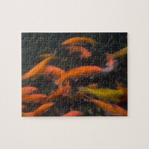 Feng Shui believe koi fish bring good luck. Puzzles