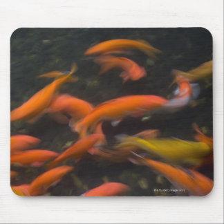 Feng Shui cree que los pescados del koi trae buena Mousepad